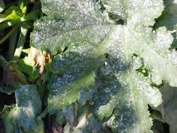Plant Diseases With Pictures - organic disease control organic growers gardening