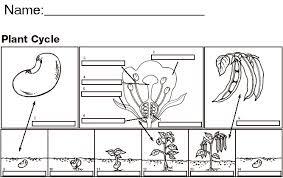exploring plants