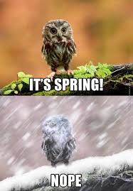 Funny Owl Meme - are you having a bad day owl fix that for you the daily geek