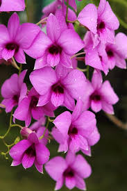 Flower Of Orchid - 2148 best beautiful flower u0027s and nature plant images on pinterest