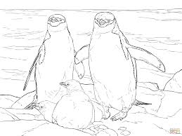 chinstrap penguin family coloring page free printable coloring pages