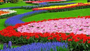 how to design vegetable garden free vegetable garden planner houston how to build and arrange a