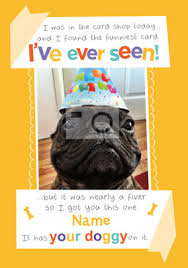 pet themed birthday cards funky pigeon