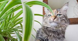 30 common toxic houseplants from a z keep pets away