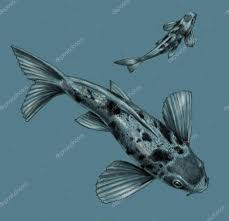 japanese koi fish isolated on a blue background pencil drawing