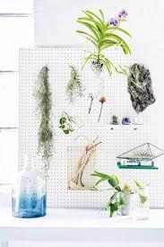 296 best plants u0026 botanicals images on pinterest plants indoor