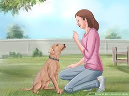 how to be a good pet sitter 11 steps with pictures wikihow