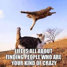 Crazy Cat Memes - cat memes home facebook