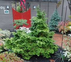 Small Shrubs For Front Yard - evergreen plants for northwest gardens the garden hotline