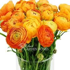 flowers in bulk wholesale ranunculus orange ranunculus flowers from