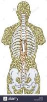 anatomy of human being image collections learn human anatomy image