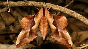 the naming of moths tracy fells granta magazine