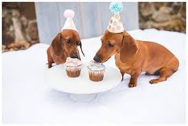 dog birthday party two hearts weddings dog birthday party