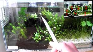 native aquatic plants uk aquarium plants in my aquascaped tiger shrimp tank youtube