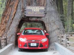 Chandelier Drive Through Tree Human Weight Helping Vanagon Escape Clutches Of Leggett Drive Thru