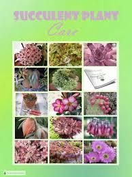succulent facts succulent plant care light soil and cultivation requirements
