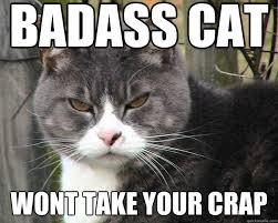 Meme Badass - badass cat wont take your crap misc quickmeme