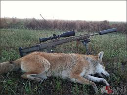Coyote Hunting Lights Project Coyote Smasher Predatormasters Forums