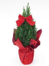 1pcs artificial tabletop mini pine trees