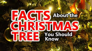 facts about the christmas tree you should know youtube