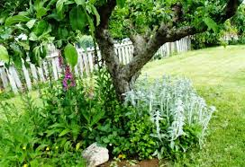 organic granny organic gardening in my yard and garden early