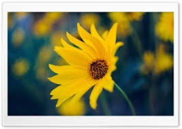 wallpaperswide com flowers hd desktop wallpapers for widescreen