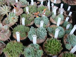 download succulent containers for sale solidaria garden