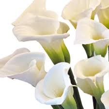 white calla lilies calla flower arrangement