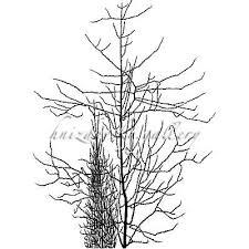 jacques hnizdovsky 028 trees woodcut 1960 18 125 x 13