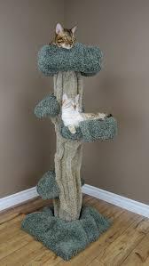 extraordinary real tree cat trees design decorating ideas