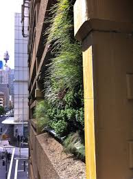 Wall Gardens Sydney by Vertical Gardens Sydney Green Walls Growing Well