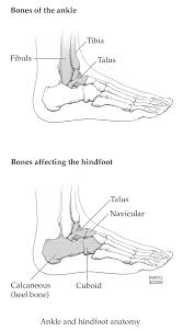 pediatric sports related injuries of the lower extremity ankle