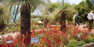 australian native garden plants western australia garden in mediterranean biome eden project