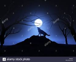 3d landscape background with a wolf howling at the moon stock