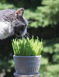 saving kitty and your sanity state by state gardening web articles