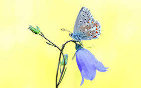 beautiful butterfly on the flower hd wallpapers rocks