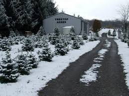 choose and cut faq treetop acres christmas trees