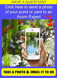 How To Make A Koi Pond In Your Backyard by Backyard Koi Pond Builder Contractors Rochester Ny Acorn Ponds