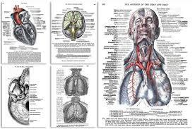 Anatomy Of Human Body Pdf Human Anatomy Books On Dvd Old Medical Art Greys Anatomy