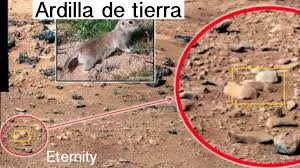 imagenes de marte ocultas por la nasa la realidad perdida la nasa usa fotos del desierto de mojave eeuu