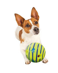 amazon com allstar innovations wobble wag giggle ball dog toy