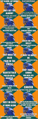 Paranoid Parrot Memes - i ve compiled the best of paranoid parrot socially awkward