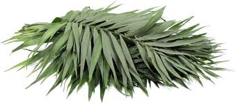 where to buy palms for palm sunday palm sunday holy week and the symbolism of the palm branch