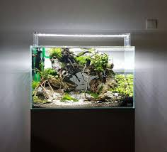 best aquascaping freshwater 014 meowlogy