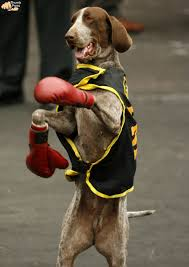 boxer halloween costume for dog in the photograph dressed up dogs from around the world