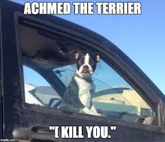 Boston Terrier Meme - boston terrier memes imgflip