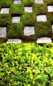 moss and stone gardens moss and stone gardens blog part 7