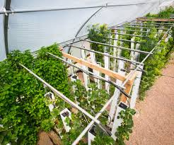 collection greenhouse pictures photos best image libraries