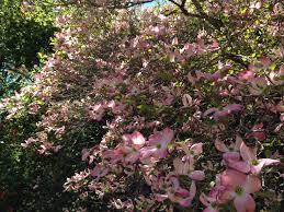 Australian Garden Flowers by The Best Place To Garden In Australia U2013 Janna Schreier Garden Design