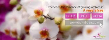 orchid plants for sale order a to z varieties of orchid plants online and we deliver to